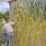Bâtiment de surveillance des crues, RD 16A, Pézilla-la-Rivière, impression numérique sur film adhésif et alu composite (pose de la fresque)