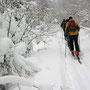 weiter geht es in einen schönen Winterwald hinein