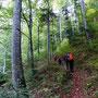 """Der Wald zeigt sich noch erstaunlich """"Un-Herbstlich"""""""
