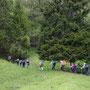 Eintritt in den Schluchtwald
