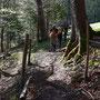 Austritt aus dem Wald auf den Jurahöhen