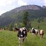 Die Aiguilles de Baulmes ist das schönste Felsmassiv im Jura, unser Weg führt aber leider nur unten vorbei