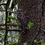 Ein Waldkauz beobachtet uns zehn Minuten lang