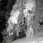 Mit viel Schnee auf den Ästen, das sieht man nur selten auf Schneewanderungen!