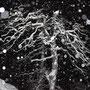 Unser Geisterbaum auf der Lehnfluh