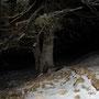 Einsamer Baum in der Dunkelheit