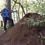 Der grösste Ameisenhaufen der Nordwestschweiz
