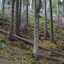 Am Einstieg zum Häxewägli liegen die Bäume seit Jahren