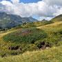 die Alpweiden hier sind grüner als bei uns im Jura