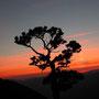 Sonnenuntergang auf dem Rüttelhorn an der Donnerstagswanderung vom 18. September 2003