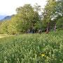 Riesige Blumenwiese im Abstieg in den Balmberg