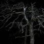 Wie im Gruselfilm grinst der Baum in der Nacht aus dem senkrechten Abgrund