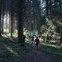 abendliche Waldstimmung