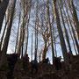 Ausstieg auf die Hofbärgli Alpweiden