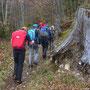 mächtiger Baumstrunk in der Region Wagnerbann