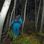 im dichten Unterholz ostseitig der Hütte