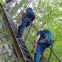 Leiter nach Chuchigraben