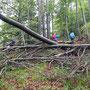 Von dieser Stelle kann Sturmholz fast nicht abtransportiert werden