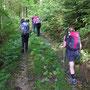 Erstmals steigen wir auf einem Waldweg auf der Nordseite Richtung Dilitschchopf