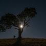 und sein Lieblingsbaum im Mondlicht