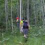 In der Nähe der Schauenburg steigen wir in den Wald ein