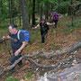 Trotz Windgeräuschen über den Baumwipfeln ein schweisstreibender Aufstieg