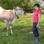 Dem Ueli seine Rinder sind immer die Zutraulichsten
