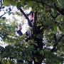 """Sybille """"opfert"""" sich gerne und besteigt den höchsten Baum auf dem Hällchöpfli ..."""
