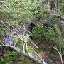 Kein Wunder wenn in diesem Urwald zwei Mitwanderer im Abstieg verloren gehen...
