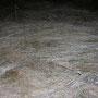Das meterhohe Gras auf dem Bettlachstock ist vom Schnee bereits niedergedrückt