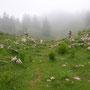 Bis zum Chalet de la Dole steigen wir im Trockenen ab, dann setzt ein einstündiger starker Regen ein