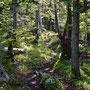 aber auch die Waldpartien sind sehr malerisch