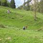 Die Grashöhe reicht noch nicht aus für die Rindersömmerung
