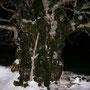 der schönste Baum im Jura