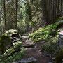 Waldpassage vor Dagro