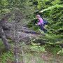 Ein paar Meter und man taucht in einen Urwald ein