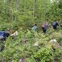 im dichten Unterholz