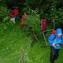 Kurzer Waldaustritt auf die Weide