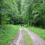 Der Regen hat nachgelassen und die schmalen und sehr steilen Wanderwege werden wieder breiter und flacher