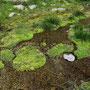 die Greina naht, erste wunderschöne Biotope tauchen auf