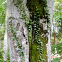 Zauberwald Schauenburg