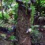 Pflanzenzucht ist eine der Haupteinkünfte in La Curva