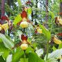 Orchideen-Tour