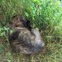 moegespeeld met kontje in de wind en snuit in het gras