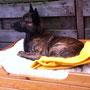 in huis en tuin is Faido een rustige hond... hier in zijn bed inde tuin.