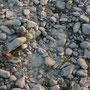 Rhein-Niedrigwasser, 11.11.11