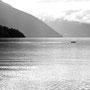 die Schweinsawale im Fjord beobachten