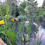 Idyllischer Teich