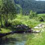 Teich zum Entspannen