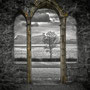 "tOG-M.S.008 - ""Elrons Garden"" - Scotland - Cycle/ Touched Landscapes - 2013 - Edition 1/ 151,8 x 110 cm, Echtfotoabzug Alu-Dibond mit UV-Laminierung - Courtesy tOG-Düsseldorf (c) M. Sander"